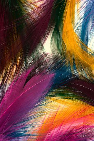 Обои на телефон перья, цветные