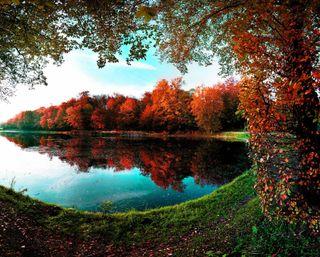 Обои на телефон отражение, осень, озеро, листья, лес, деревья