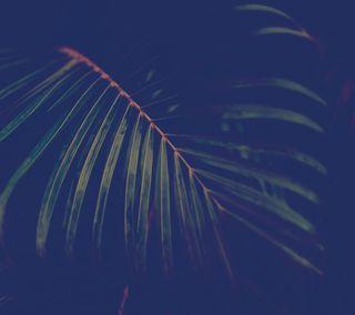 Обои на телефон флора, джунгли, природа, лес, зеленые, frond