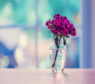 Обои на телефон стекло, цветы, фон, фиолетовые, приятные, крутые, ваза, cool vase