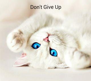 Обои на телефон не, надежда, кошки, котята, глаза, dont give up