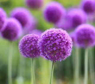 Обои на телефон размытые, цветы, фиолетовые, крошечный, fragrance