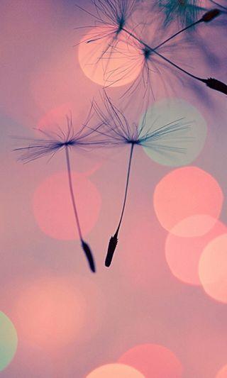 Обои на телефон боке, цветы, розовые, природа, одуванчик, новый, классные, дизайн, арт, абстрактные, new dandelion, art