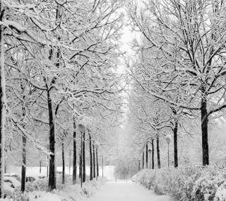 Обои на телефон зима, пейзаж
