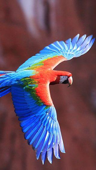 Обои на телефон попугай, цветные, птицы, colors of parrot
