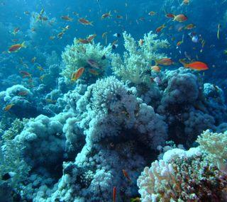 Обои на телефон рыби, замечательный, природа, подводные, underwatercolours, redsea, diving