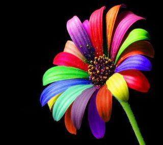 Обои на телефон лепестки, цветы, цветные, природа, пейзаж, новый, красочные, stem, colourful flower hd