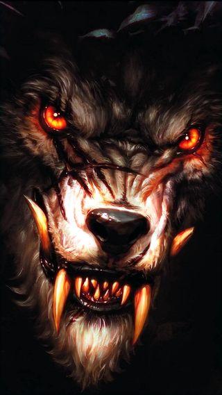 Обои на телефон волк, loup