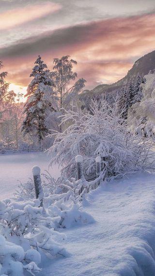 Обои на телефон красота, снег, приятные, природа, лес, крутые, классные, зима