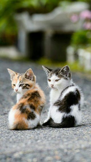 Обои на телефон котята, милые, маленький, коты, два