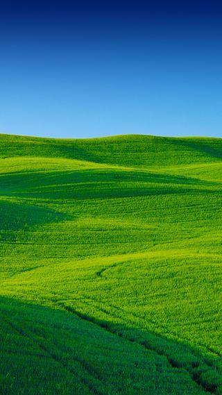 Обои на телефон фотография, трава, природа, поле, пейзаж, небо, зеленые