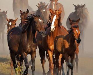 Обои на телефон лошадь, riyadhali66