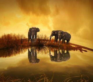 Обои на телефон слон, природа, лучшие, крутые, hd, 4k, 2016, 1080p