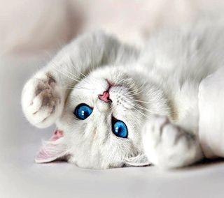 Обои на телефон кошки, белые