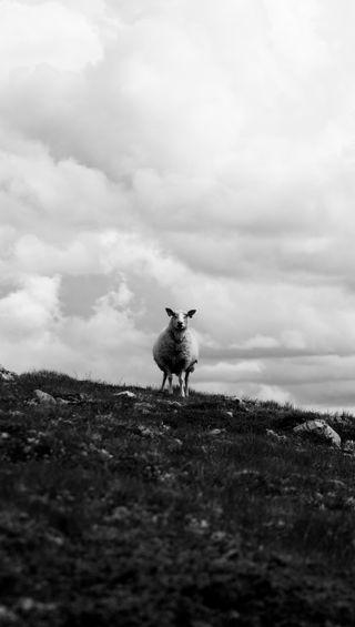 Обои на телефон формы, природа, пейзаж, овца, облака, милые, животные, sheep shape, btw