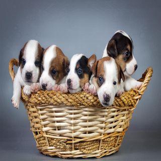 Обои на телефон щенки, взгляд, приятные, прекрасные, милые, корзина, puppies basket