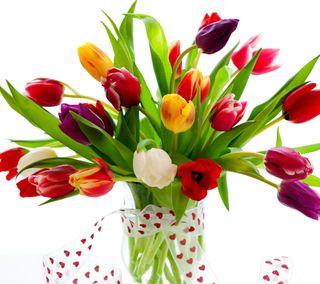 Обои на телефон тюльпаны, цветы, природа