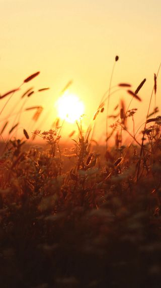 Обои на телефон солнце, сияние, пшеница, коричневые