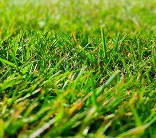 Обои на телефон ультра, трава, солнечные, природа, пейзаж, зеленые, uhd, hd, 4k