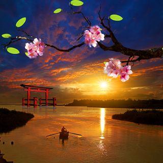 Обои на телефон сакура, японские, рыбалка, прекрасные, море, лодки, закат, дерево, вода, вечер, sakura tree, japanese evening, fishing boat