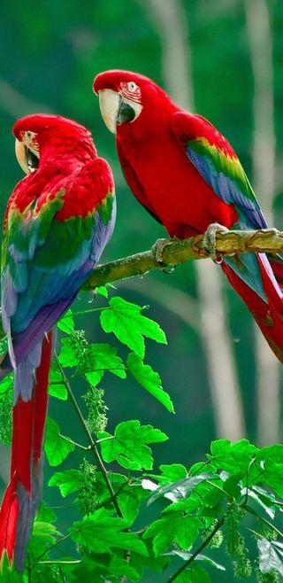 Обои на телефон попугай, свобода, птицы, попугаи, будь, macaw, coluorfull, be free