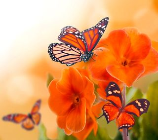 Обои на телефон весна, цветы, цветочные, оранжевые, бабочки