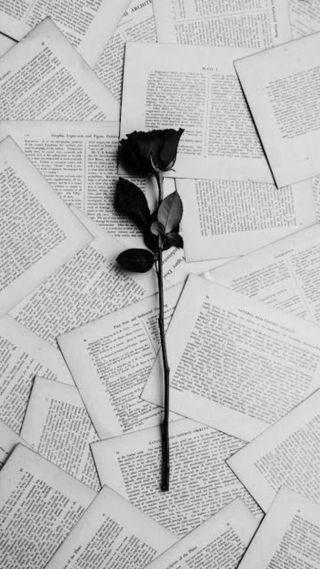 Обои на телефон франция, черные, романтика, розы, красые, книга, write