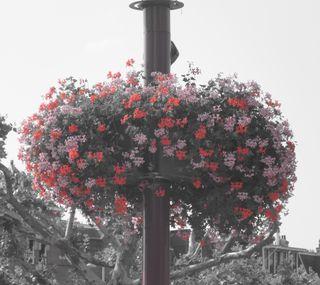 Обои на телефон растения, цветы