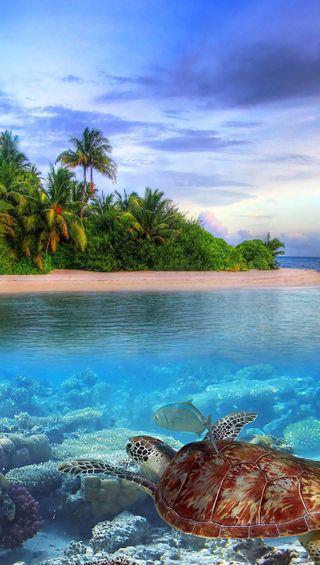 Обои на телефон подводные, чистые, свежий, природа, океан, жизнь, вода, арт, underwater life, hd, art, 4k
