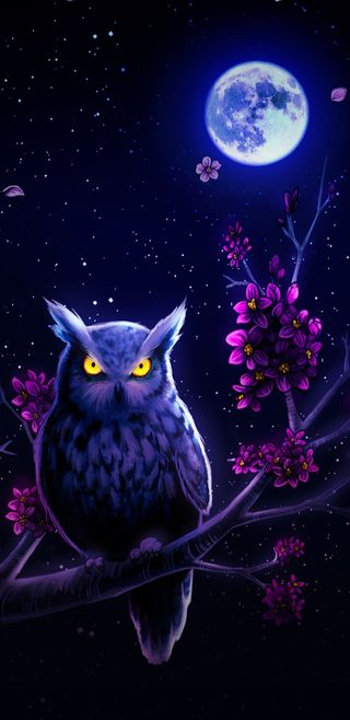 Обои на телефон вишня, цвести, сова, ночь, величественные, majestic owl, cherry blossom
