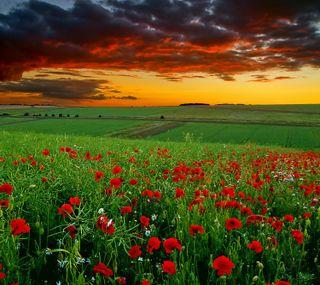 Обои на телефон сумерки, поле, облака, маки, закат