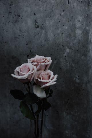 Обои на телефон замечательный, розы, розовые, приятные, день, весна, белые, have, good
