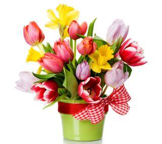 Обои на телефон свежие, тюльпаны, весна, букет, fresh spring bouquet, blooming