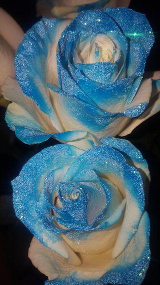 Обои на телефон пароль, ты, синие, розы, премиум, не, блестящие, glitter rose blue
