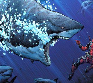Обои на телефон акула, ----------