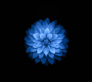 Обои на телефон цветок, лотус, эпл, цветы, синие, природа, hd, apple