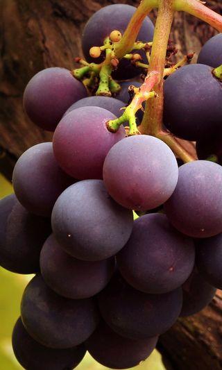 Обои на телефон фрукты, природа, виноград