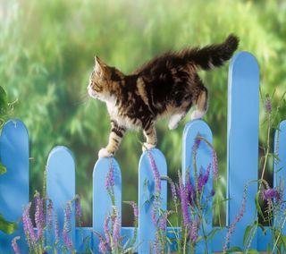 Обои на телефон прогулка, милые, кошки, забавные, животные, funny cat walk, funny cat, cute animal, cat walk
