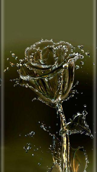Обои на телефон цветы, розы, дизайн, вода, fleur