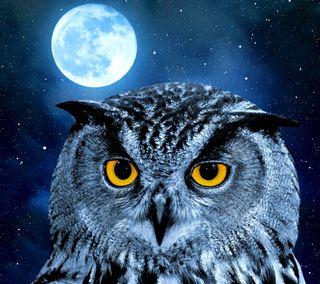 Обои на телефон сова, фон, сияние, ночь, луна, owl background, night moon shine