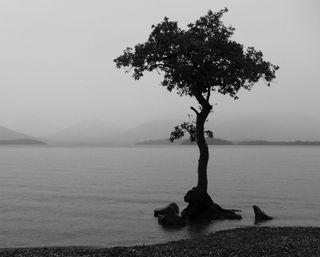 Обои на телефон силуэт, темные, одинокий, ночь, море, дерево, waterscape, lonely tree, a tree