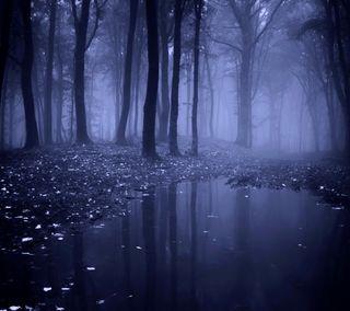 Обои на телефон туман, утро, лес