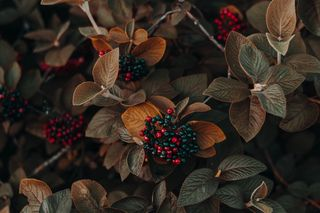 Обои на телефон природа, осень, beatiful, 4k