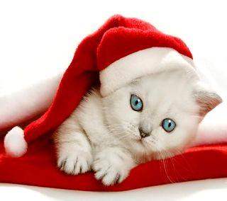 Обои на телефон санта, рождество, кошки, котята