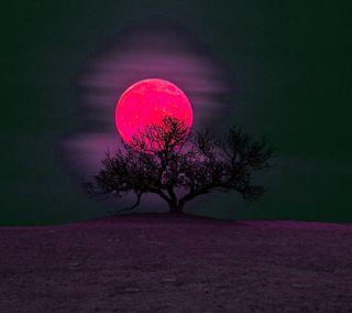 Обои на телефон рай, луна