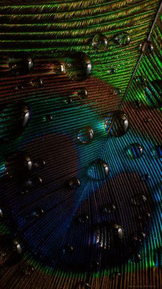 Обои на телефон павлин, текстуры, перо, красота, капли, вода, айфон, абстрактные, peacock feather 6, iphone