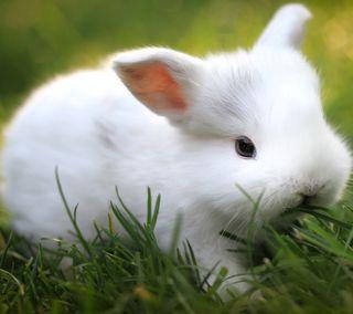 Обои на телефон кролик, белые