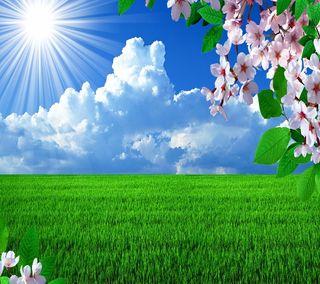 Обои на телефон цвести, солнечный свет, трава, время, весна, spring time