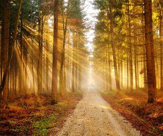 Обои на телефон солнечный свет, свет, лес, дорога, деревья, trees wallpapers