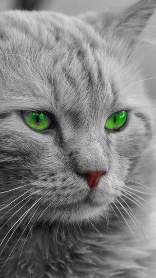 Обои на телефон питомцы, милые, лицо, кошки, котята, зеленые, животные, глаза, green eyes